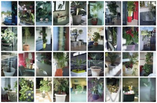 Domestic Plants 03
