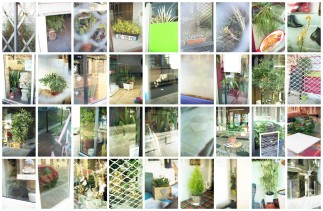 Domestic Plants 05