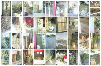 Domestic Plants 06