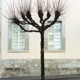 Tree Sculpture (12)