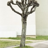 Tree Sculpture (14)