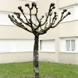 Tree Sculpture (15)