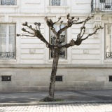 Tree Sculpture (16)