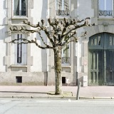 Tree Sculpture (19)