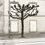 Tree Sculpture (20)