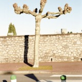 Tree Sculpture (22)