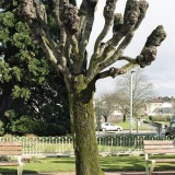 Tree Sculpture (26)