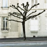 Tree Sculpture (28)
