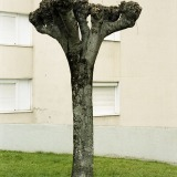Tree Sculpture (35)