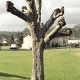 Tree Sculpture (7)